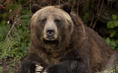 sad-grizzlies