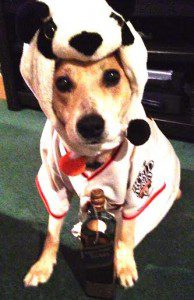 Writer TJ Macias' dog Chas, celebrating the Giants win.